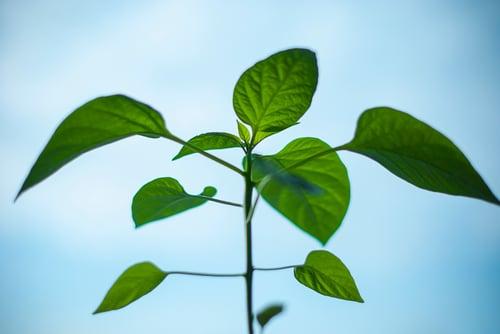 nature-plant-morning-green.jpg
